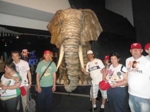 Cuidado con el elefante